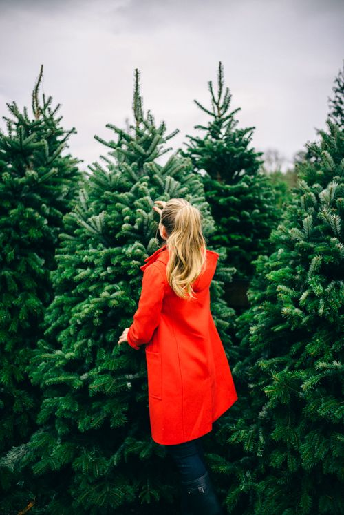 Christmas Tree Hunting!  Sponsored by Dunkin' Donuts #DunkinAtHome #BakerySeries #ad