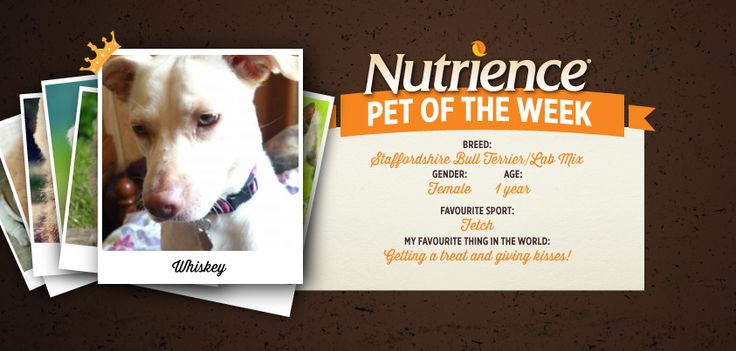 Whiskey is a sweet mix who loves getting treats and giving kisses. The perfect trade off. Submit your pet here: http://bit.ly/PetOfWeek