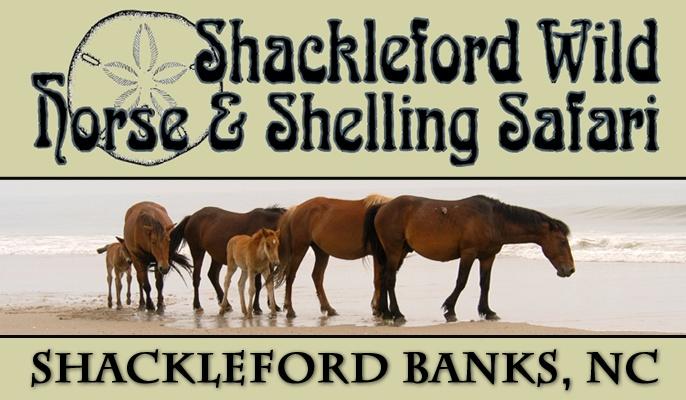 Shackleford Wild Horse & Shelling Safari | Port City Tour Company | Atlantic Beach, Beaufort, Emerald Isle, Morehead City & New Bern NC
