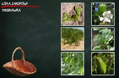 Owoce i warzywa w szkole: gry i zabawy online