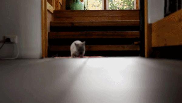wombat run!