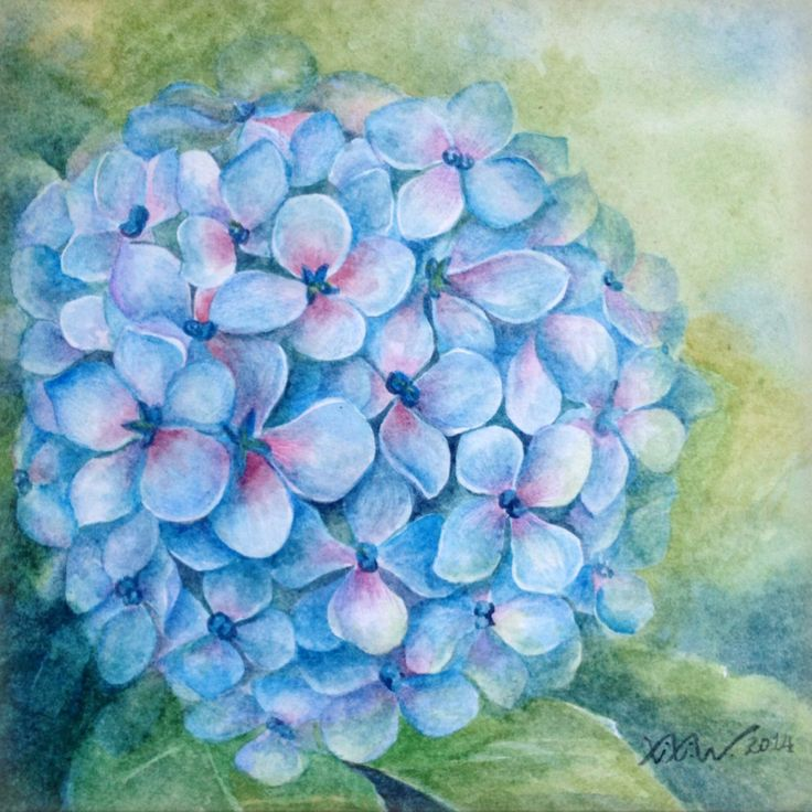 Hydrangea 1 - Watercolor - Painted by Xixi Wang (2014)