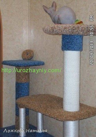 Кошки масДомики для кошек своими руками с