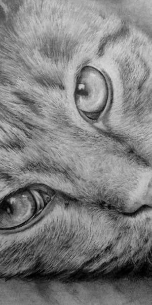 How to draw a cat online art lessons