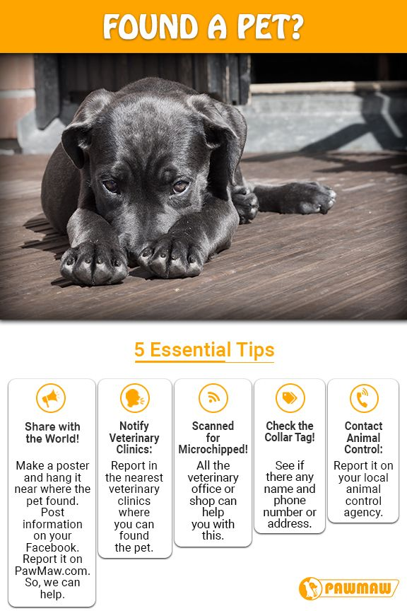 Found A Pet Here What You Should Do If You Found Pets Pet Clinic Pets