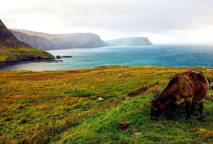 Incontro ravvicinato col bovino �� In Scozia, più in generale nelle Highlands scozzesi, non è raro incappare in mucche dal pelo lungo (razza Highlander) e nei loro vitelli. Nell'aria l'odore della salsedine generato dalle onde che si infrangono sulle alte scogliere. Attorno il verde lussureggiante dei prati dove le stesse mucche pascolano. Tutto questo contribuisce a rendere lo scenario non solo bucolico ma persino onirico ❤ . . . . . #simumatti #wanderlustlife . #justmarried #travelblogger…