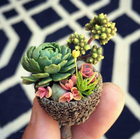 319 Best Tiny Flower Pots Images On Pinterest Flower 400 x 300