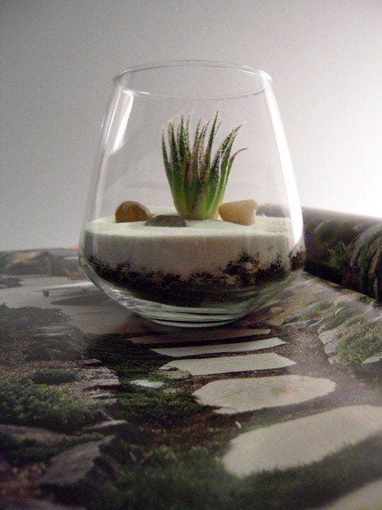adorable terrarium