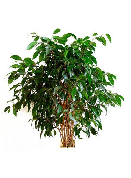 best 25 plantes d int rieur d polluantes ideas on On plantes depolluantes
