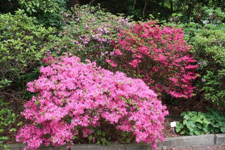 Botanical Garden, Rhododendron