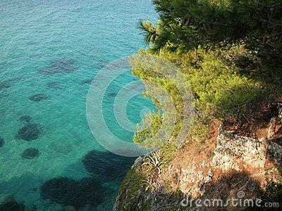 Pine trees on rocky Aegean coast of Agistri Island near Aegina, Greece. Taken in August 2011.