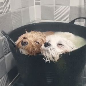 Dogs Taking a Bath