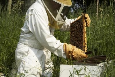 Homemade Beekeeper Costumes