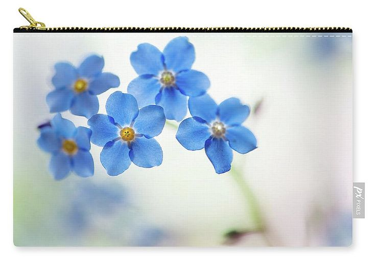 Forget Me Not Carry-all Pouch featuring the photograph Forget-me-not Flowers by Jenny Rainbow