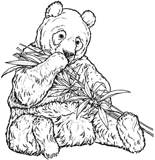 giant panda  panda coloring pages bear coloring pages