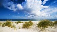 Strandhafer auf Sylt. | Bildquelle: wdr