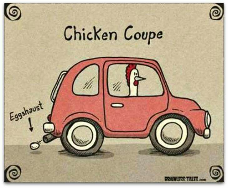 Funny Chicken Jokes: 70 Best Chicken Jokes Images On Pinterest