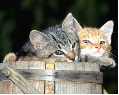 les 25 meilleures idées de la catégorie anti puce chat naturel sur