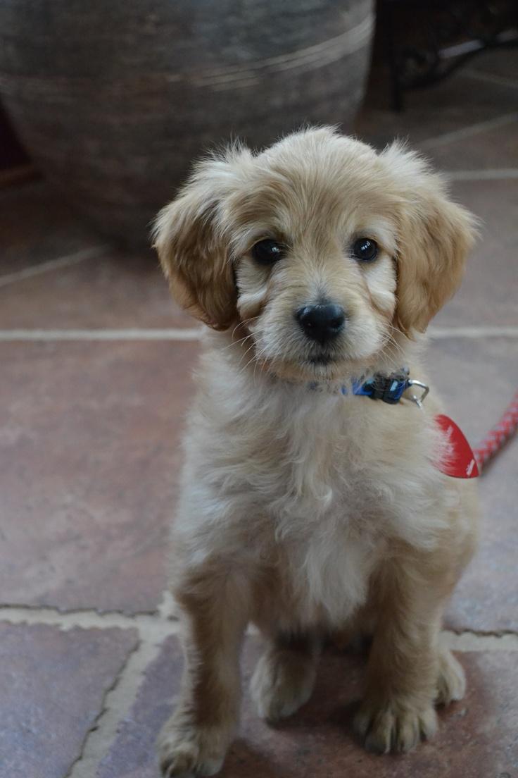 best animals images on pinterest baby puppies cutest animals