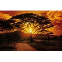 055VE XXXL - Icke-Vävd / Non-Woven Fototapet Fototapet African Sunset