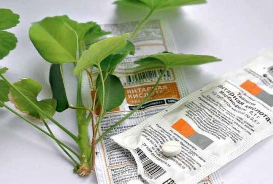 Янтарная кислота для растений, в том числе и комнатных, применяется очень часто.Это и регулятор роста, и антистрессовый препарат, и нормализатор естественной микрофлоры почвы. Она помогает растению лучше усваивать питательные вещества из почвы, справляться с неблагоприятными условиями окружающей сре