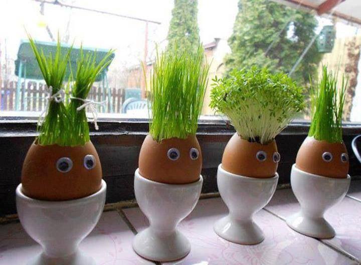 Ervas plantadas em casca de ovo