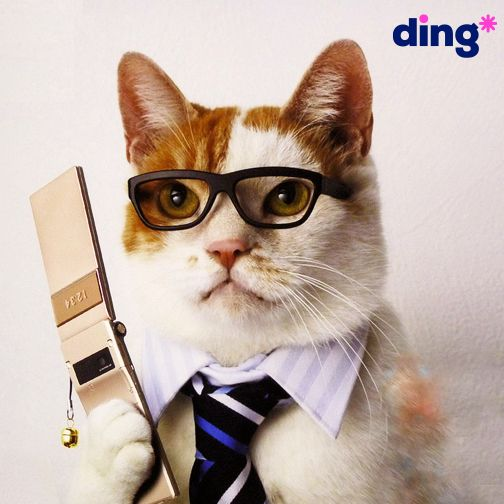 'Martha, these numbers are cat-a-strophic!' - #JustKidding #DingAnimals