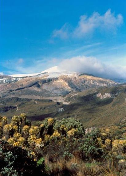 Parque Natural Los Nevados, Andes. Colombia