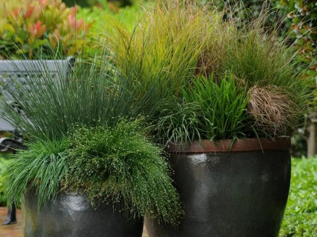 hgtv gardens shows you how to add variety to containers by using grasses