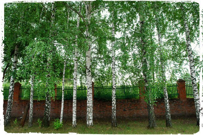 Old school fence. #poetry #freeimages #freepictures #freephotos #haiku #fences #fence #school #russia #ruralrussia #village