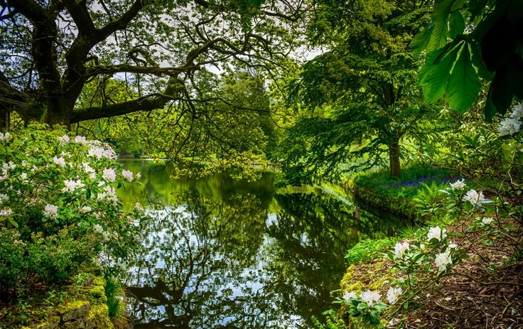 Estaciones del año Primavera Floración de árboles Estanque Naturaleza