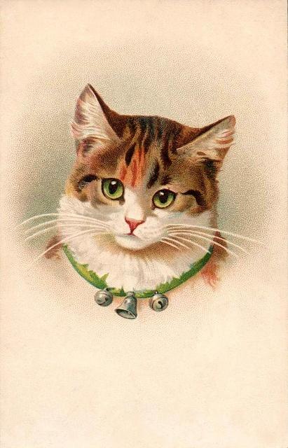 Chat avec un collier de grelots et une clochette