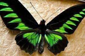 Butterflies And Moths 21