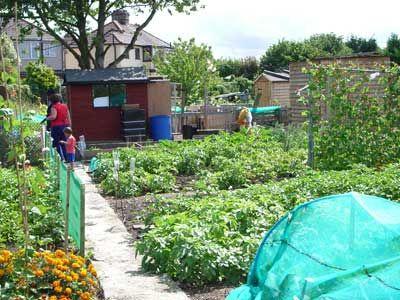 Garden allotment design english allotments a very for Garden allotment ideas
