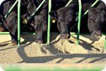 The gov't is out of control..!!!!!!!!!  States weigh laws that would make it an act of terrorism to report abuses at factory farms    Wednesday, January 30, 2013 by: Ronnie Cummins    Learn more: http://www.naturalnews.com/038884_terrorism_animal_abuse_factory_farms.html#ixzz2JSAfHoT6