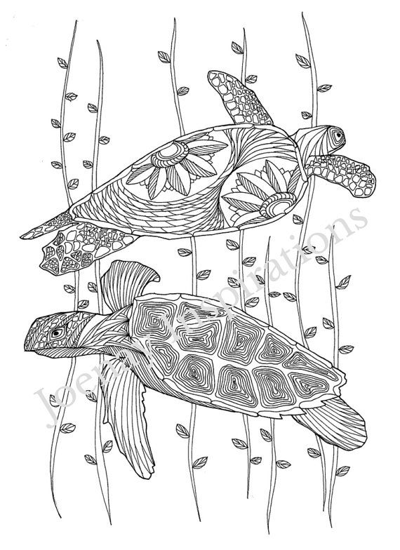 Turtles Amazing Animals Adult Coloring Pages By Joenay