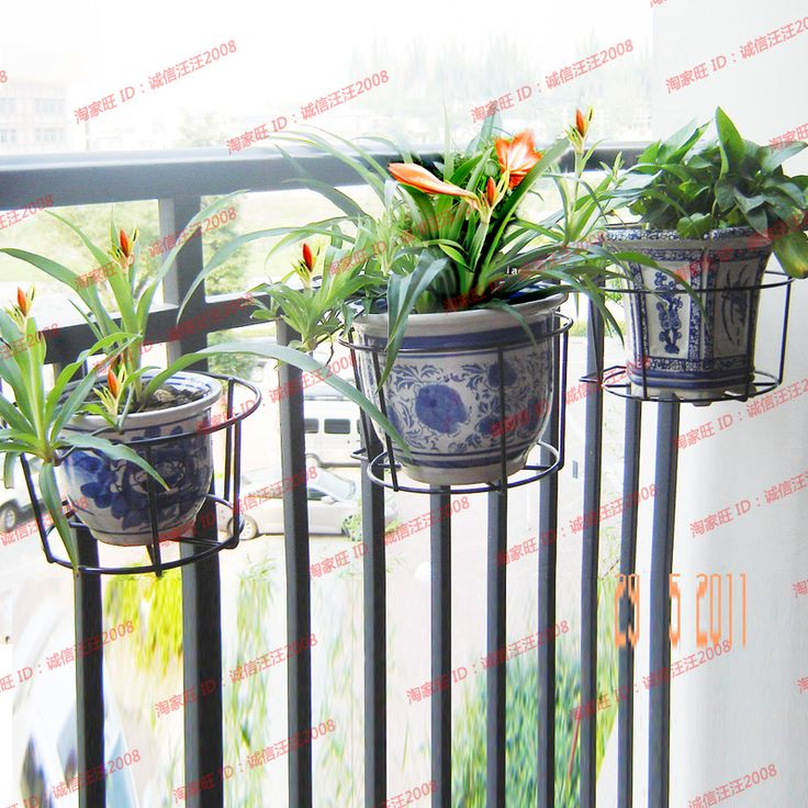 Best 25 hanging flower pots ideas on pinterest potted for Easy plants to grow in pots outside