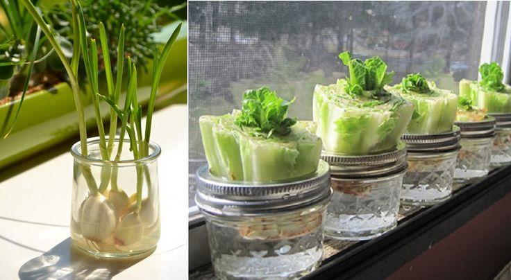 Vous voudrez surement faire des tests! Comme il ne coûte rien d'essayer,un contenant transparent, de l'eau et du soleil,ce sont de bonnes expériences à faire à la maison. Et si vous réussissez, vous pourrez les planter au jardin! Les enfants pourro