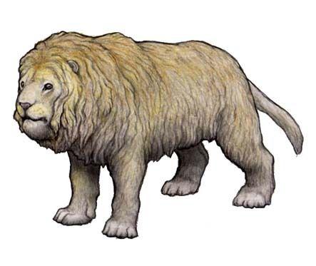 The cave Lion, Panthera leo spelaea (1810) Phylum : Chordata Class : Mammalia Order : Carnivora Family : Felidae Genus : Panthera Species : P. leo Subspecies : P.l. spelaea • Late Pleistocene (500 000 - 20 000 years) • 2,1 m long and 350 kg (size) •...