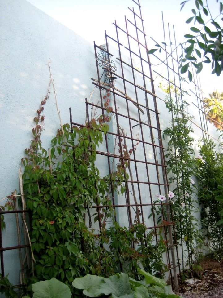 Vertical Gardening against house - Valley Permaculture Alliance