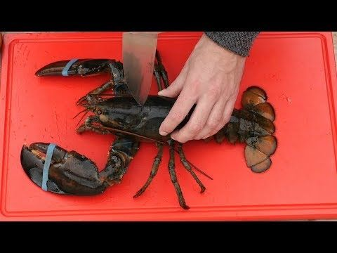 GRAPHIC - Live lobster - 2 Grilled Lobster Recipes - YouTube
