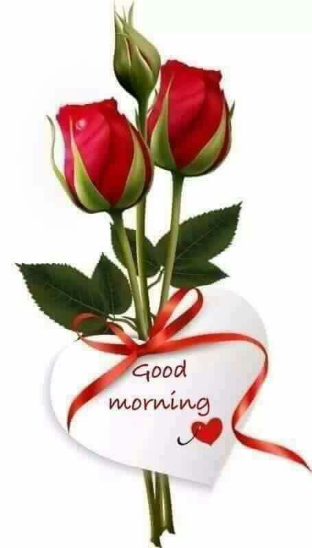 Good Morning Beautiful Red Rose Image : Best good morning darling images on pinterest
