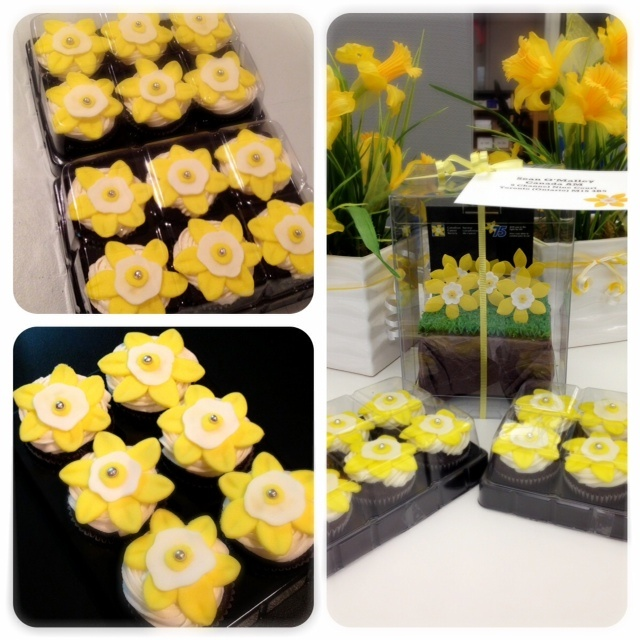 Daffodil Cupcakes for CCS