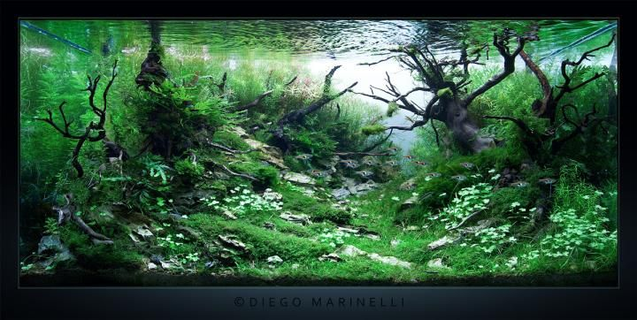 """AquaScaping Aquagoin - """"One too many morning"""" 2012"""
