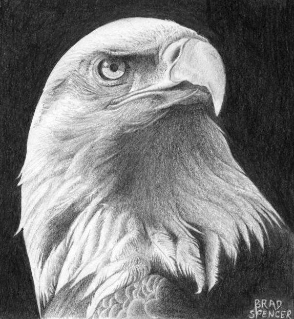 Gallery For > Eagle Head Drawing | Projects to Try ...
