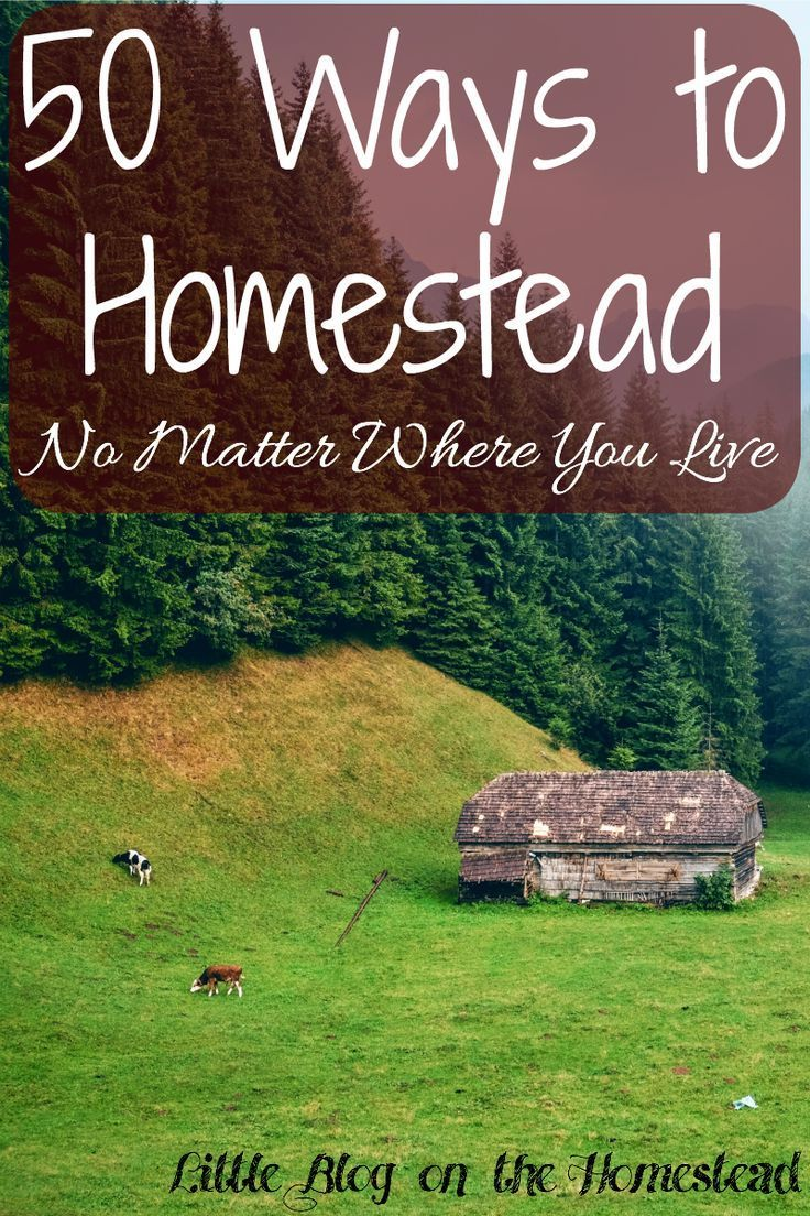 50 ways to homestead no matter where you live for Where to buy cheap land for homesteading