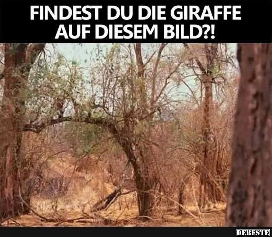 Findest du die Giraffe auf diesem Bild?