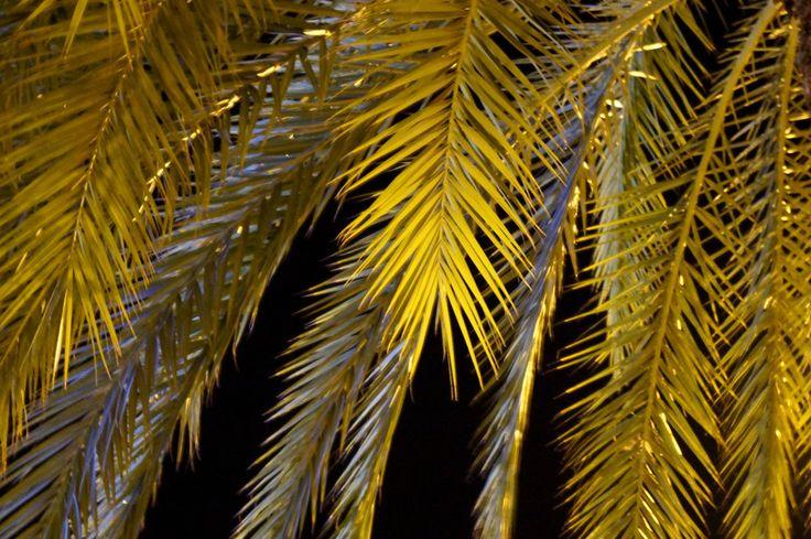 Illuminated nature by Kunigunda Korosi on 500px