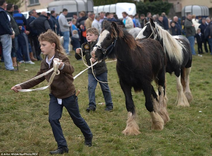Two young boys lead their horses around the parade ring, with the festival being one of th...