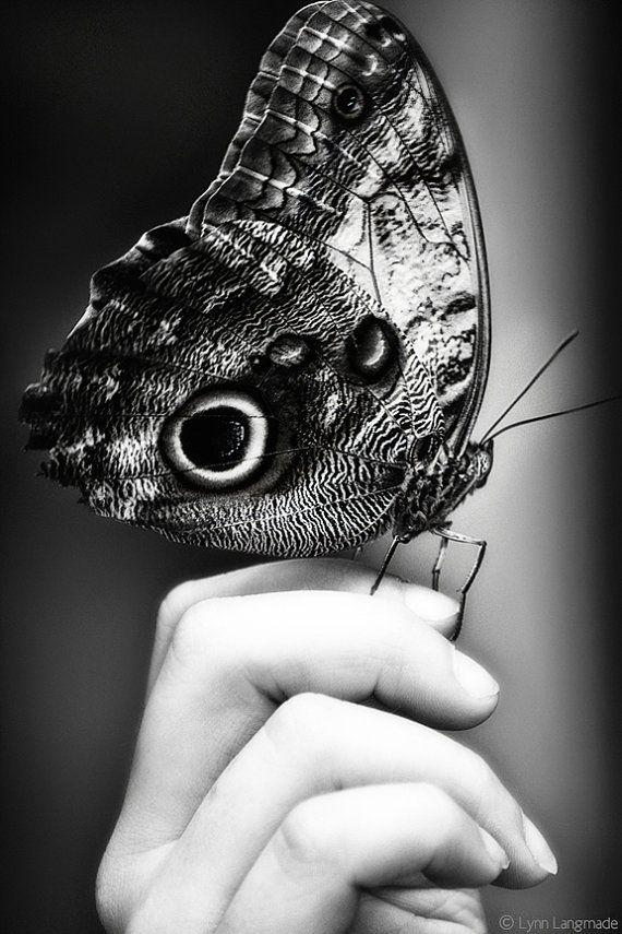 É em ti que me reencontro, surpreso. Como uma lagarta que acorda do casulo e ainda não sabe que é borboleta. E é por isso que te olho tanto, atarantado. Porque não sei voar, tenho asas de borboleta mas é o teu sorriso que as faz voar. O teu sorriso secreto, como uma brisa morna de Verão.